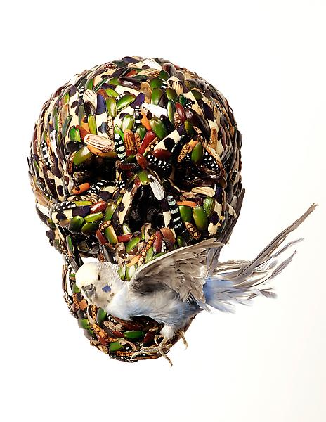 Jan Fabre 	SKULL WITH BUDGERIGAR, 2000 	Jewel beetle, click beetle and ground beetle shields on synthetic material with budgerigar 	6.3 x 7.09 x 7.87 inches 	16 x 18 x 20 centimeters