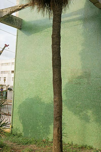 William Eggleston 	UNTITLED (PALM TREE TRUNK, GREEN WALL, CUBA) 2007 	Pigment print 	28 x 22 inches 	71.1 x 55.9 centimeters