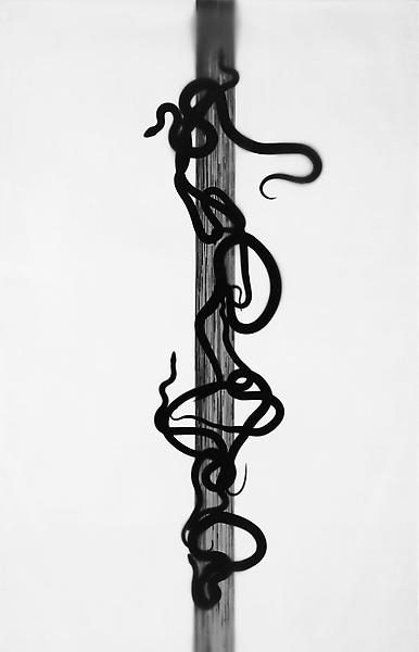 Adam Fuss 	CADUCEUS, FROM THE SERIES 'HOME AND THE WORLD' 2010 	One from a series of gelatin silver print photograms mounted on canvas 	102 1/2 x 60 inches 	260.4 x 152.4 centimeters 	(AF# S40.1) 	CR# FU.22686