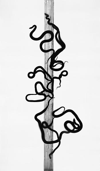 Adam Fuss 	CADUCEUS, FROM THE SERIES 'HOME AND THE WORLD' 2010 	One from a series of gelatin silver print photograms mounted on canvas 	102 1/2 x 60 inches 	260.4 x 152.4 centimeters 	(AF# S65.1) 	CR# FU.22690