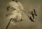 Robert Mapplethorpe - Gallery - Artists - Cheim Read